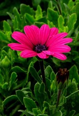 Flora flor fiuscia