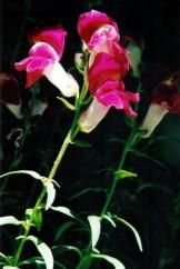 Flora flor perritos