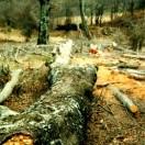 Problematica tala bosque